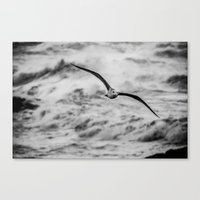 Arrival of the Birds # 2 Canvas Print