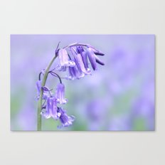 English Bluebell Canvas Print