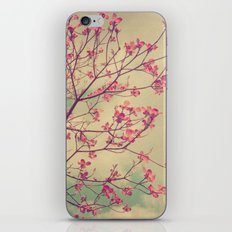 Vintage Pink Dogwood Tree in Flower iPhone & iPod Skin