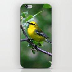Blue-winged Warbler iPhone & iPod Skin