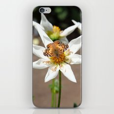 Perched butterfly iPhone & iPod Skin
