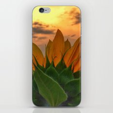 sunflower in the sunset iPhone & iPod Skin