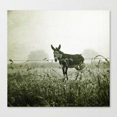 le regard de l'âne Canvas Print