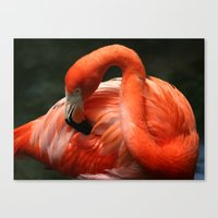 Flamingo # 2 Canvas Print