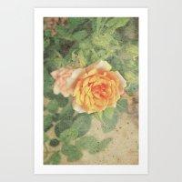 A rose in it's prime Art Print