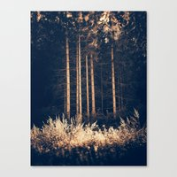 Tall birches Canvas Print