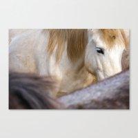 Camargue Horse Portrait … Canvas Print