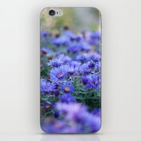 Sea of Asters iPhone & iPod Skin
