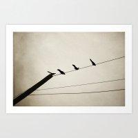birds on a line Art Print