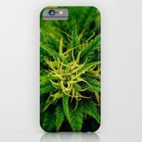 Marijuana iPhone 6 Slim Case