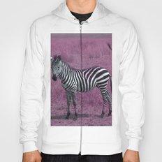 Zebra Foal in Pink Hoody