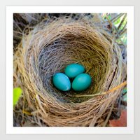 Three Little Robin's Eggs Art Print