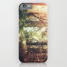 Beautiful California Redwoods iPhone 6 Slim Case