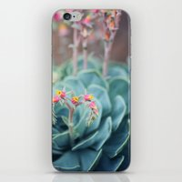 Echeveria #1 iPhone & iPod Skin