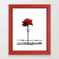 Barbed Wire Red Rose Framed Art Print