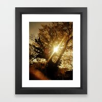 Sunset Behind the Tree Framed Art Print
