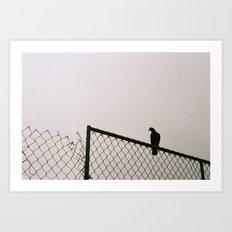 Pigeon Fence Art Print