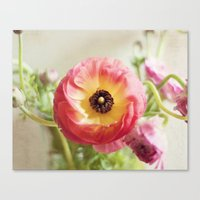 Ranculus Canvas Print