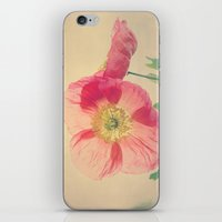 Pink Iceland Poppies In … iPhone & iPod Skin
