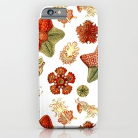 Sea Stars And Star Fish iPhone 6 Slim Case