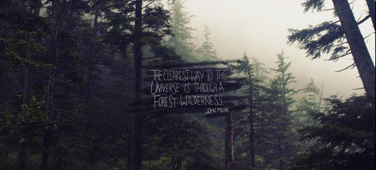 Forest Universe Art Print