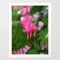 Bleeding Heart Art Print