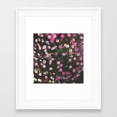 Pink Marguerite Framed Art Print