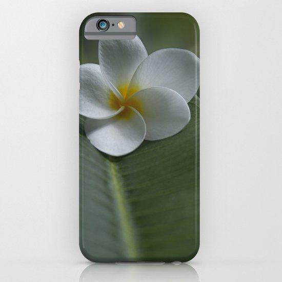 He Aloha no O Waianapanapa - White Tropical Plumeria - Hawaii iPhone & iPod Case