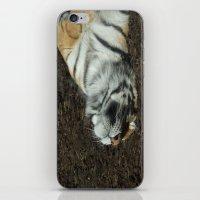 Lazy Days Sleeping In Th… iPhone & iPod Skin