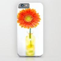 Aglow in Wintertime iPhone 6 Slim Case