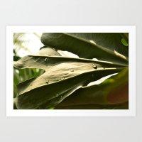 Sun Lit Green Life Art Print