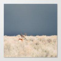 Jackson Hole Deer Canvas Print