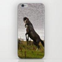 Welsh Pony 6 iPhone & iPod Skin