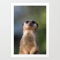 Meerkat Art Print