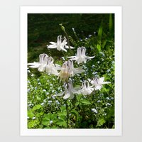 The Doves (Columbine) Art Print