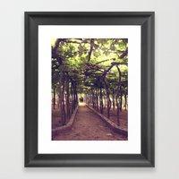 Lemon Grove In Ravello, … Framed Art Print