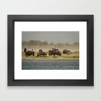Water Buffalo on the Banks of the Ganges Framed Art Print