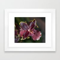 Tiny Maroon Orchid Framed Art Print
