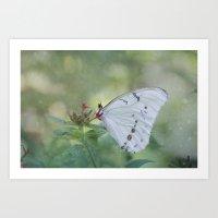 White Morpho Butterfly Art Print