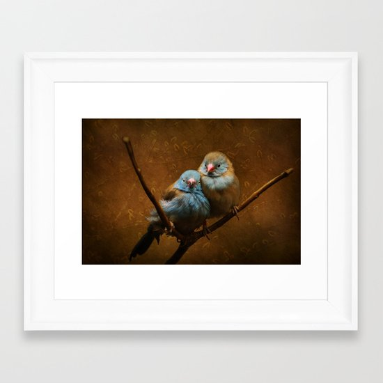 Male and Female Cordon Bleu Canaries Framed Art Print