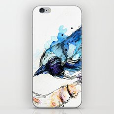 Black-Throated Blue Warbler iPhone & iPod Skin