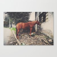 Indomable Canvas Print