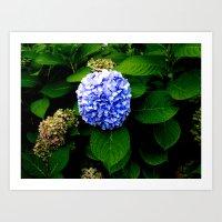 Blue Flower (Edited) Art Print