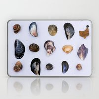 English Seashells Laptop & iPad Skin
