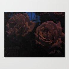 Night Roses Canvas Print