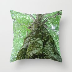 old growth tree Throw Pillow