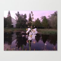 Reflective Pond Canvas Print