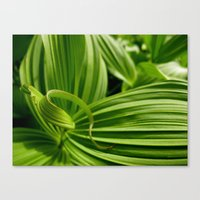 Green Plant Canvas Print
