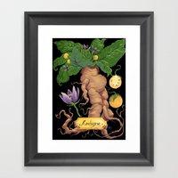 Mandrake Root Framed Art Print
