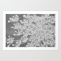 Apiaceae Art Print